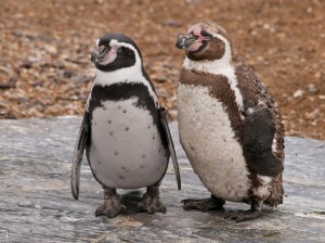 antidepresive pinguini humboldt psiholog