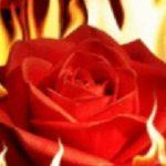 Poză de profil pentru Roxana Mironescu